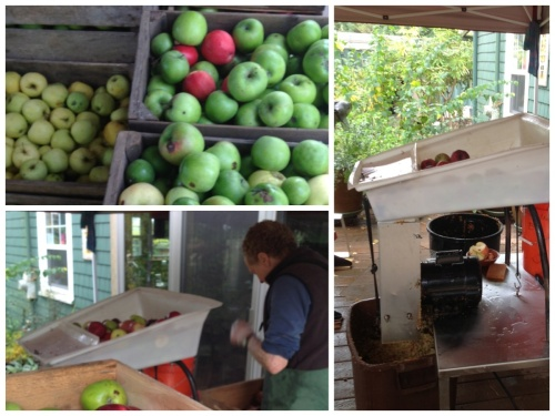 First the apples must be crushed into a slurry before they are pressed. It is best to use a variety of sweet and tart apples to get a more complex and interesting flavor. John had a mechanical grinder for this process and that saves a tremendous amount of work. The apples don't need to be perfect but they shouldn't be wormy or diseased.