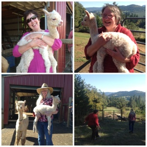 Foothills Alpacas
