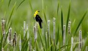bird on cattail