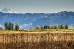Mt Hood Steigerwald Lake Natl Wildlife Refuge 14 (1 of1)